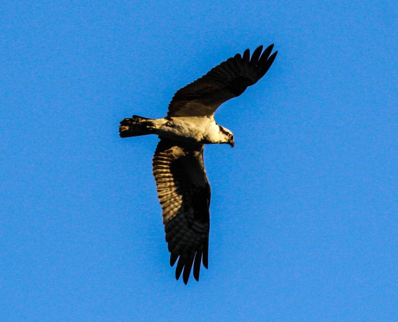 A best osprey 2-1