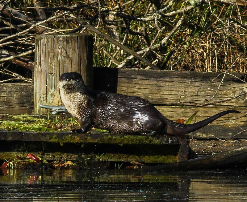 A one otter 14 (1 of 1)
