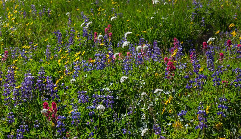 A wildflowers 4 (1 of 1)