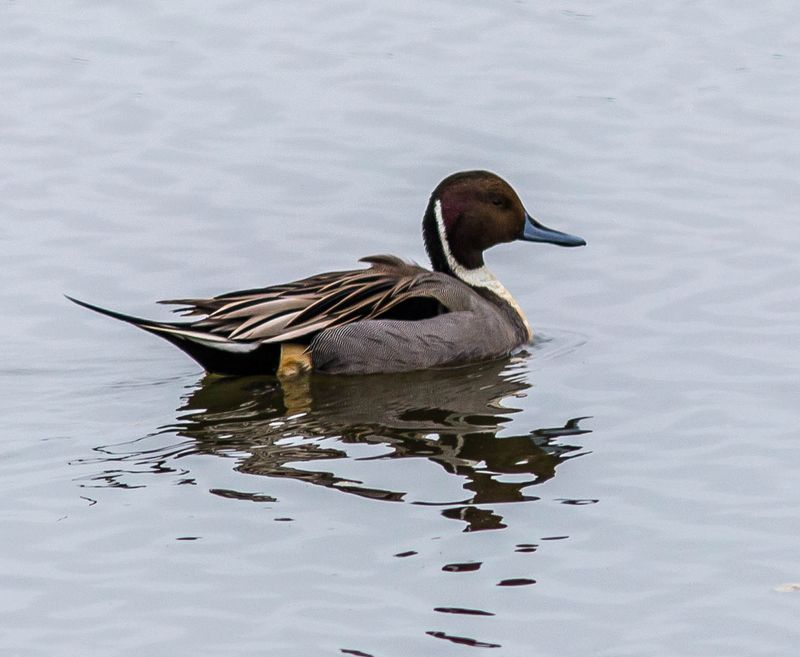 A teal 3 (1 of 1)