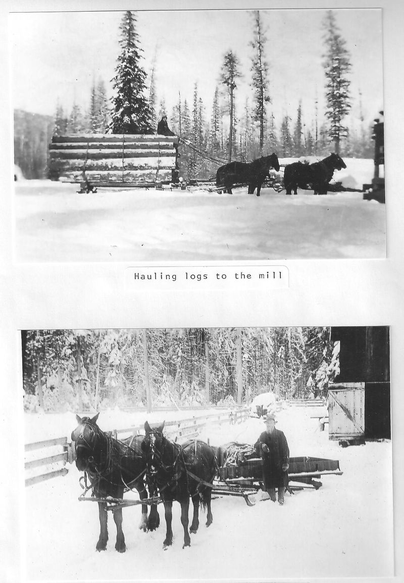 Hauling logs in the snow