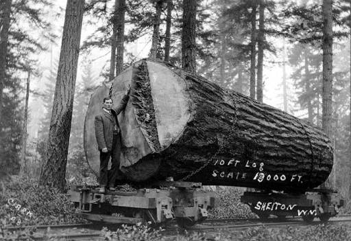 Big log on rail car 1908