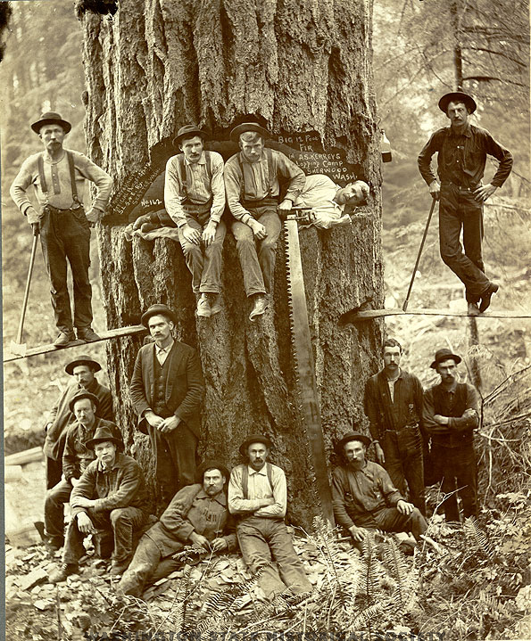 Sherwood logging camp log