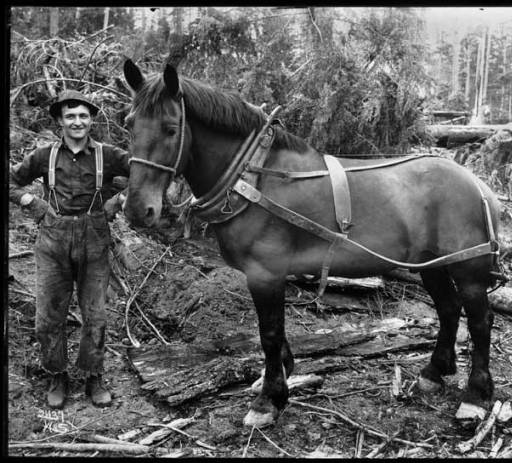 11 logger and horse 1905