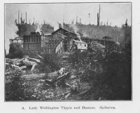 Spiketon lady wellington mine