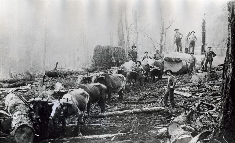 Logging with oxen