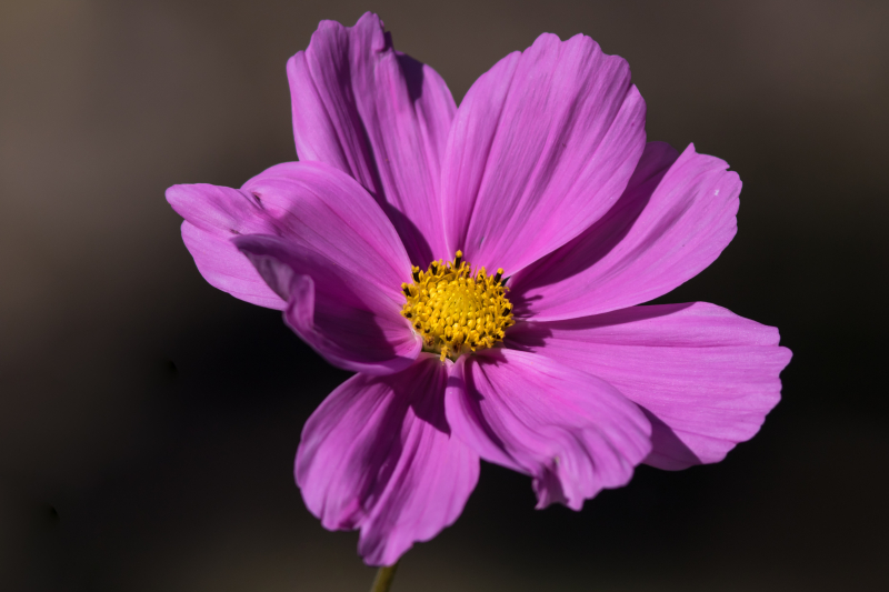 Cosmos 1 (1 of 1)