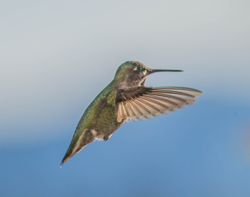 Hummer 10 (1 of 1)