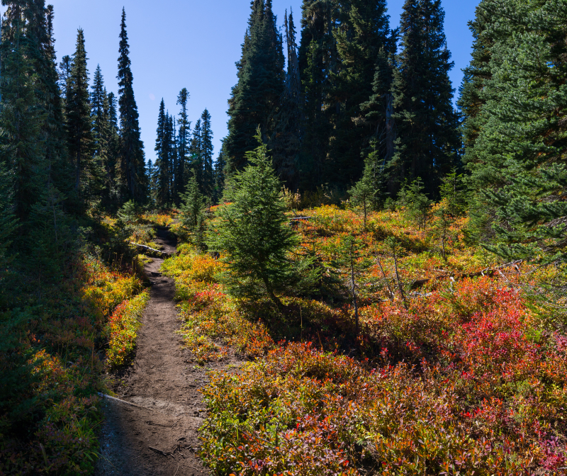 Trail Color 2 (1 of 1)