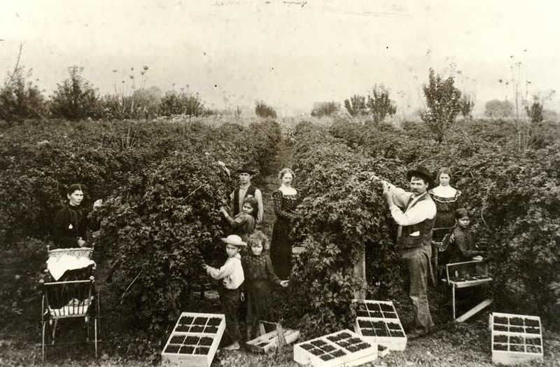 Sumner wright family picking berries