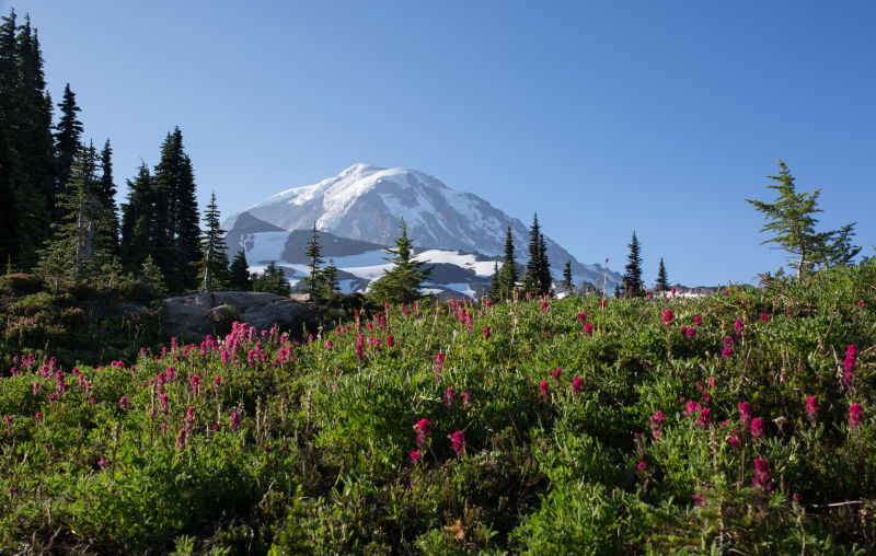 Mountain & Flowers 2 (1 of 1)