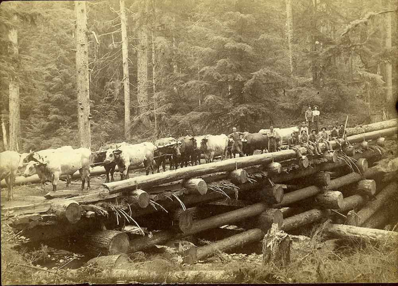 Logging team 1