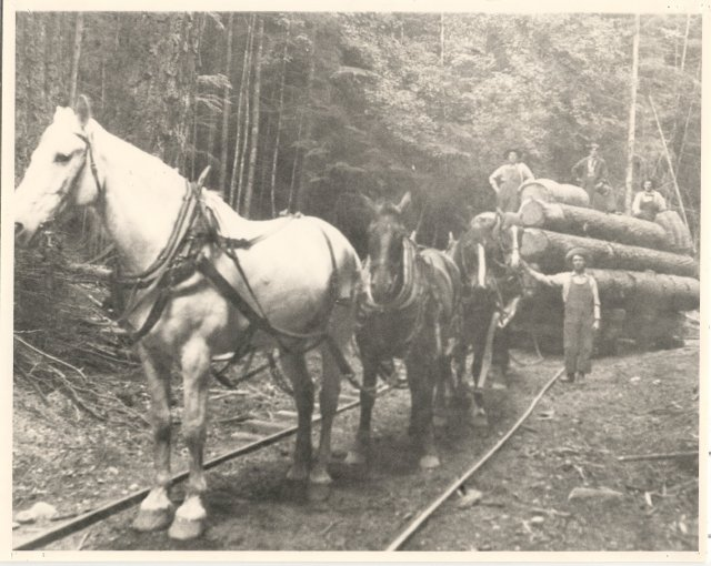Logging rail on the cheep