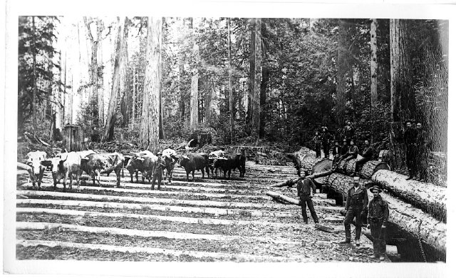 A logging in sumner