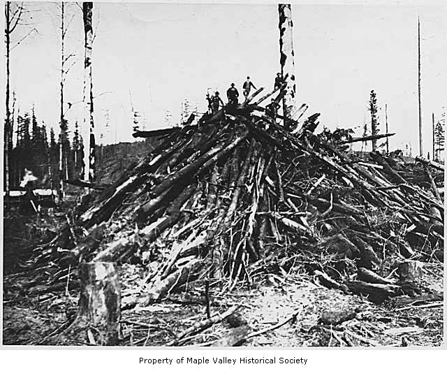 Logs to be burned