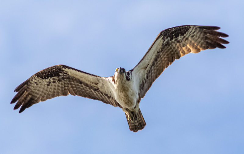 Lake Osprey 2-1